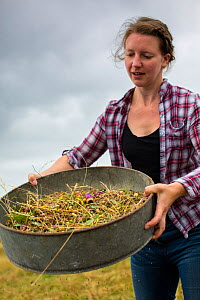 Meadow grassland seed harvesting by the Cotswolds Conservation Board, Syreford, Gloucestershire. July 2015.  -  Nick Turner