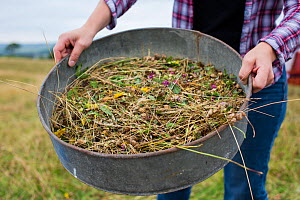 Meadow grassland seed harvesting by the Cotswolds Conservation Board, Syreford, Gloucestershire, UK. July 2015.  -  Nick Turner
