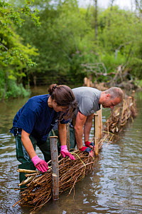 Corporate volunteers from Thames Water rebuilding river bank with hazel faggots on River Windrush at Brassey GWT Nature Reserve, Gloucestershire, UK. August 2015.  -  Nick Turner