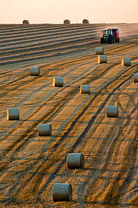 Baling straw during late summer harvest, Hawkesbury Upton, Gloucestershire, UK. September 2015.  -  Nick Turner