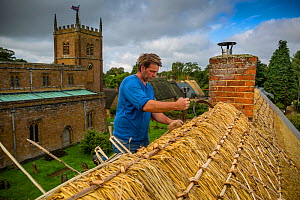 Dan Quatermain, master thatcher, working on a thatched roof in Wroxton village, Oxfordshire, UK. September 2015.  -  Nick Turner