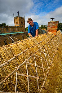 Dan Quatermain, master thatcher working on a thatched roof in Wroxton village, Oxfordshire, UK. September 2015.  -  Nick Turner