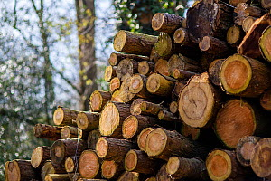 Timber stacked up for seasoning at a sawmill at Buckholt Woods, Gloucestershire, UK. March. - Nick Turner