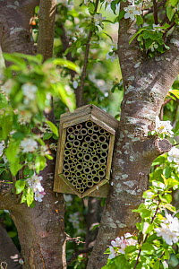 Garden insect box positioned in an apple tree, Stroud, Gloucestershire, UK. May. - Nick Turner