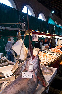 Fresh Swordfish in Rialto Market Venice, Italy, April  -  Gary  K. Smith