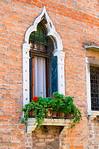 Potted Pelagoniums in window box Venice, Italy, April. - Gary  K. Smith