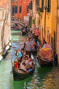 Gondolas with tourist passengers negotiating canals of Venice, Italy, April.  -  Gary  K. Smith
