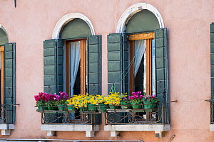 Venetian window box with succulents and cyclamen Venice, Italy, April.  -  Gary  K. Smith