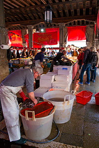 Traders and customers in Rialto fish market, Venice, Italy, April. - Gary  K. Smith