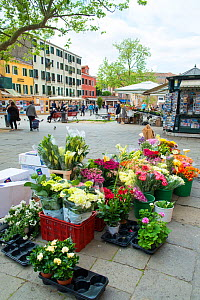 Flower and pottted plants for sale at Campo Santa Margherita, Market Square Venice, Italy, April. - Gary  K. Smith