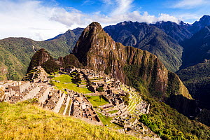 Morning light on Machu Picchu. Cusco Region, Urubamba Province, Peru. December 2013.  -  Merryn  Thomas