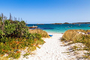 Beach access at Od Grimsby, Tresco, Isles of Scilly, England. September 2015.  -  Merryn  Thomas