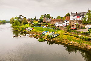 Canoes pulled up on riverbank at public house in Ross on Wye, Herefordshire, England. April 2015. - Merryn  Thomas
