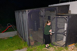 Samantha Pickering takes a bowl of mealworms to feed rescued bats in the flight cage in her garden, North Devon Bat Care, Devon, UK, October 2015. Model released. - Nick Upton