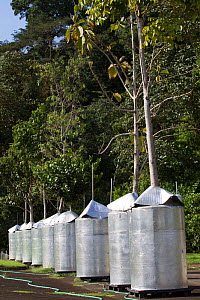 The Winter Laboratory experiments studying the chemical-physiological foundations of how tropical plants interact with the environment and respond to environmental stress. Gamboa, Panama. November 201... - Cyril Ruoso