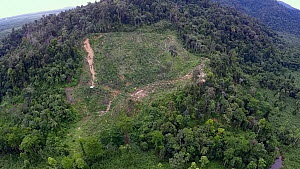 Aerial view of rainforest, showing forest clearance and start of erosion gully on hillside, Suaq Balimbing, Kluet Swamps, Sumatra, Indonesia. 2015. - Jabruson Motion