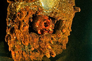 A skull in the engine room of the wreck of the Yamagiri Maru, a passenger cargo boat used as a naval military auxiliary.   Japan has made recovery efforts and has removed many bodies and returned them...  -  Pascal Kobeh