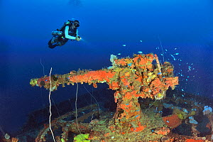 A diver above the cannon gun at the bow of the the wreck of the San Francisco Maru, a passenger cargo used as a auxiliary transport vessel, Chuuk or Truk Lagoon, Carolines Islands, Pacific Ocean  -  Pascal Kobeh