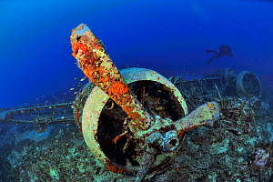 A diver on the wreck of the Bristol Blenheim bomber shot and which crashed in December 1941, Malta, Mediterranean - Pascal Kobeh