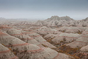 Eroded landscape, Sandstone striations and erosional features, in mist, Badlands National Park, South Dakota, USA September 2014.  -  Ingo Arndt