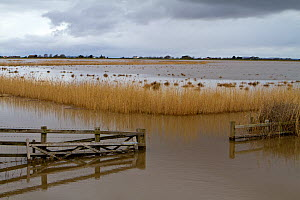 Steart Marshes, WWT reserve, flooded at high tide, Somerset, UK, April 2016. - John Waters