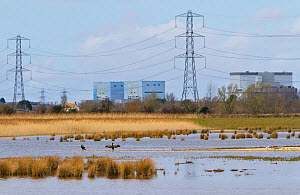 Steart Marshes, WWT reserve, flooded at high tide, with Hinkley point nuclear power station in background, Somerset, UK, April 2016. - John Waters