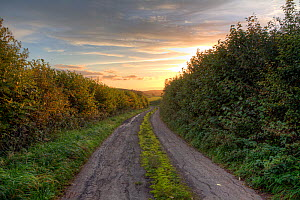 Country lane lined by dense hedgerows stretching towards sunset, Somerset, UK, October 2015. - John Waters