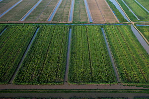Aerial view of Sugar Cane production, Guyana, South America, December 2015.  -  Pete Oxford