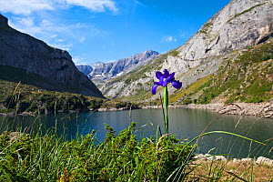 Spanish iris (Iris latifolia) beside the Lac des Gloriettes with the Breach of Tuquerouye, Pyrenees National Park, France. July. - Mike Read