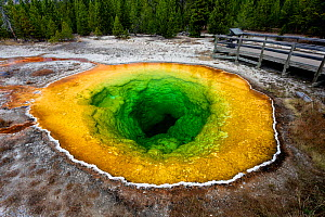 Morning Glory Pool in Upper Geyser Basin, Yellowstone National Park, Wyoming, USA. September 2015. The pool has changed from its original blue colour to green due to tourists throwing rocks, pennies a...  -  Kirkendall-Spring