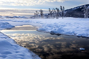 Winter sunrise with reflection on Lamar River, Lamar Valley, Yellowstone National Park, Wyoming, USA. February 2016.  -  Kirkendall-Spring
