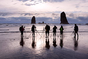 Photographers waiting for sunset at Canon Beach, Oregon, USA. April 2016. - Kirkendall-Spring