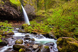 Upper Horsetail Falls (Poneytail Falls), Columbia River Gorge National Scenic Area, Oregon, USA. April 2016. - Kirkendall-Spring