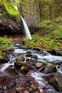 Upper Horsetail Falls (Poneytail Falls) Columbia River Gorge National Scenic Area, Oregon, USA. April 2016. - Kirkendall-Spring
