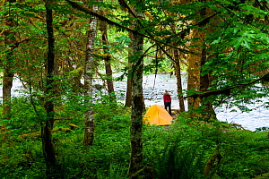 Woman camping on Enchanted Valley trail on Quinault River, Washington, USA. May 2016. Model released. - Kirkendall-Spring