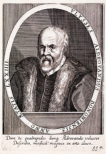 Portrait of the Ulisse Aldrovandi (1522-1605) Italian scientist, in particular a naturalist and physician. He taught in Bologna and his work 'Antidotarii Bononiensis Epitome' (1574) described the prop... - Paul  D Stewart