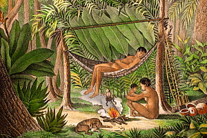 Historical illustration of extinct Puri tribe from North Coast of South America. Mother and child, and man in hammock, with poison dart frog held over fire to collect its toxin, used for poison darts...  -  Paul  D Stewart