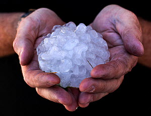 Giant hailstone retrieved from a field in Kansas in the wake of a tornado. The hailstone formed as smaller hailstones fused and froze in the massive updrafts of a storm supercell. Kansas, USA, June.  -  Paul  D Stewart