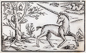 Illustration of a Unicorn, antique woodcut published ca 1560 from the 'Cosmographia' by Sebastian Munster. - Paul  D Stewart