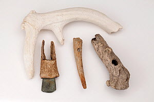 Four tools of the mesolithic / neolithic period  made from Red deer antlers. Dates range from approximately 5000 - 2000 BC. From left (and top) an antler mining pick retrieved from a British flint min... - Paul  D Stewart