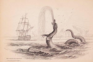 Copperplate engraving of great sea monster reported by Hans Egede in 1735. From The Naturalist's Library by Sir William Jardine. This monster or was reportedly spotted off the coast of Greenland, and... - Paul  D Stewart