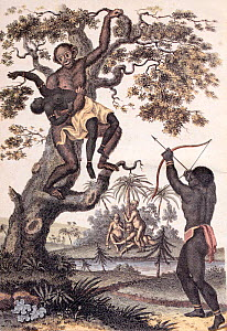 Illustration 'An Orang-Outang carrying off a Negro Girl' Frontispiece from volume two of Sibly 'An universal system of natural history : including the natural history of man, the Orang-Outang and the...  -  Paul  D Stewart