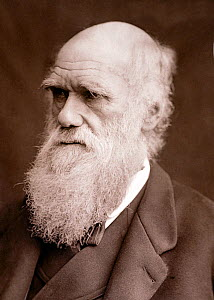 Photograph of Charles Darwin taken by Lock & Whitfield in 1877 and published in' Men of Mark' 1878.  -  Paul  D Stewart