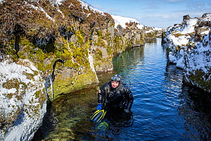 Scuba diver coming up after a dive inside the volcanic crack Nesgja, in the Asbyrgi National Park, northern Iceland - Franco  Banfi
