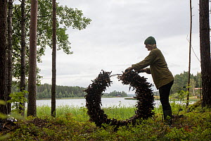 Artist preparing a circle of branches and 'found objects' for bio-degradable artwork to be reclaimed by nature over time. August 2015.  Model released. - Pal Hermansen