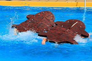 Children in swimming pool racing in Japanese giant salamander (Andrias japonicus) costume, in Salamander Festival, Yubara, Honshu, Japan, August.  -  Cyril Ruoso