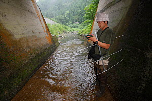 Scientist researching Japanese giant salamander (Andrias japonicus) habitat, and looking at artificial banks which destroy their habitat. Honshu, Japan. - Cyril Ruoso
