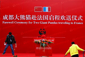 Ceremony to celebrate the departure of Giant pandas (Ailuropoda melanoleuca) to France, from Chengdu, Sichuan, China, January. - Cyril Ruoso