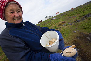 Margit with wooded eggs used to trick female Common eider (Somateria mollissima) to stay on even one egg if any go missing for any reason, Lanan Island, Vega archipelago, Norway, June - Cyril Ruoso