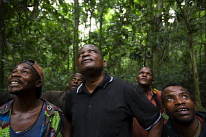 Mr Bokika with trackers in charge of Bonobo (Pan paniscus) habituation.  Mr Bokika is the leader of M'boumontour NGO, supporting the development and protection of the local bonobo population, Democrat... - Cyril Ruoso